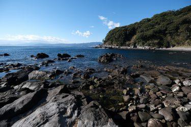 陸の森、海の森  -海岸林が育くむ海の生態系-