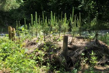樹木の健康と「病虫害」を考える –新潟市海岸松林再生事例より 第2回–