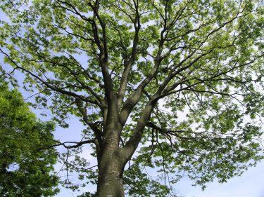 夏の暑さを和らげる樹木の力   〜第1回  砺波平野の屋敷林の事例より〜