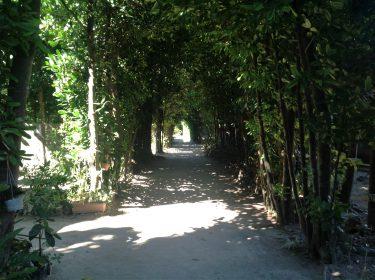 夏の暑さを和らげる、樹木の力 第3回 ~気候風土をつかさどる樹木の働き