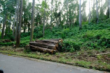 「昭和の森」環境改善地拵え作業参加者を募集します!