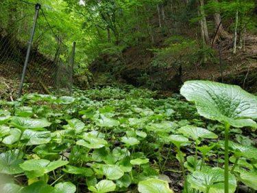満席となりました。 【水源の森再生プロジェクト】#1 山梨県小菅村で高田宏臣の連続講座が6月より始まります。