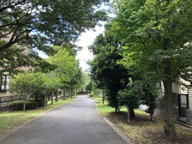 中止となりました/千葉市 おゆみ野遊歩道(中の道) 市民による環境改善WS 参加者募集のお知らせ